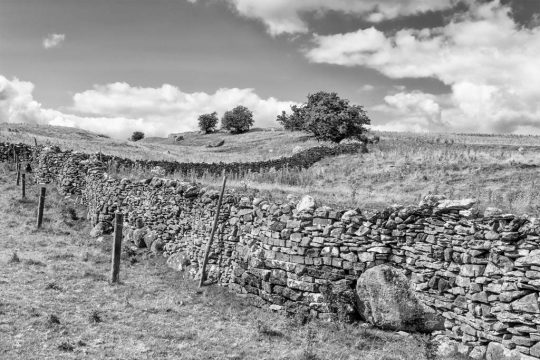 Drystone_Wall_veteran tree project