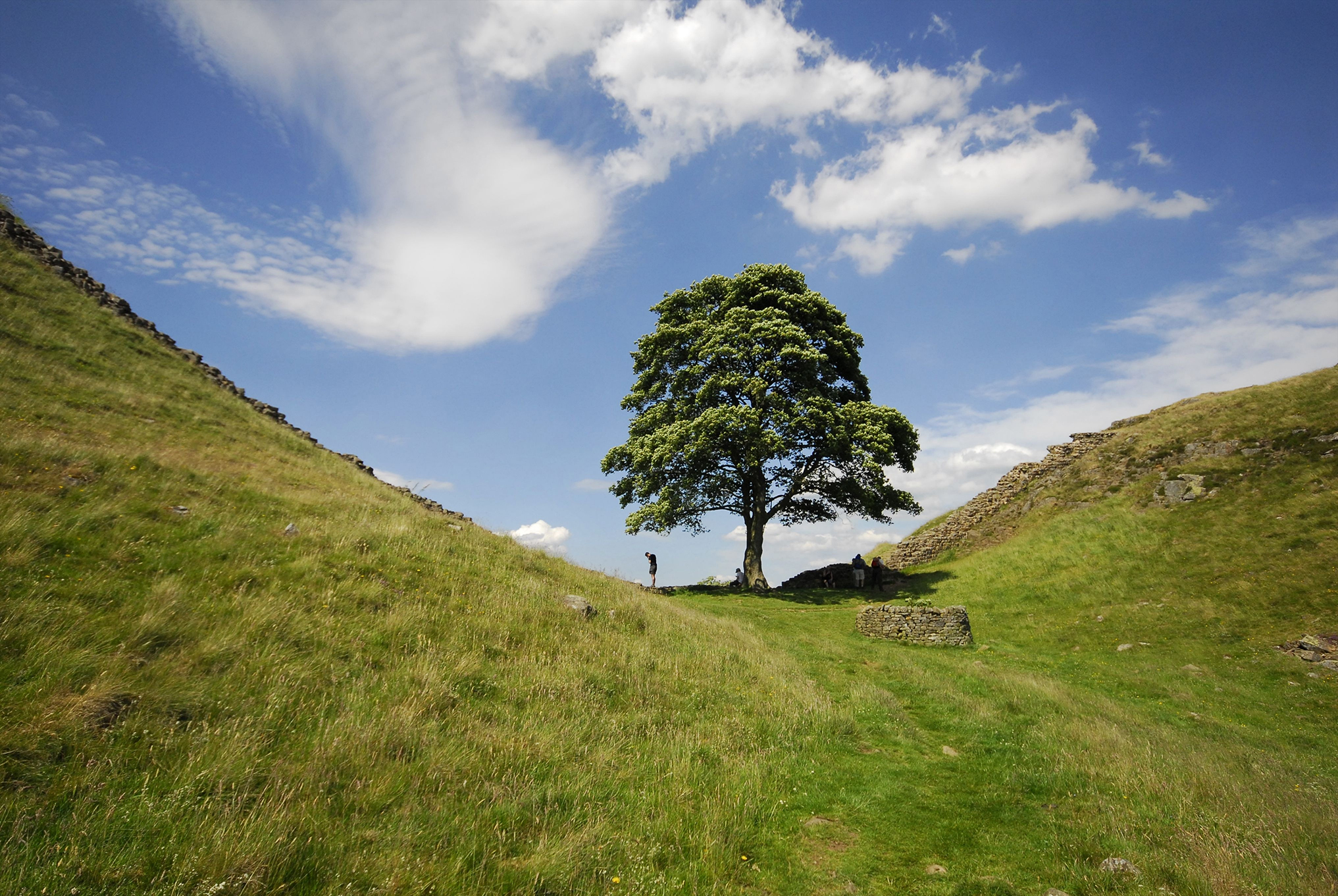 Veteran-Tree-Project-sycamore-gap