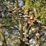 shoe tree heaton newcastle