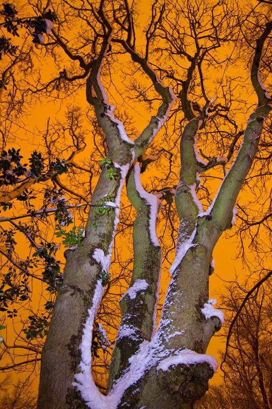 Weird_Woodland_veteran tree northumberia