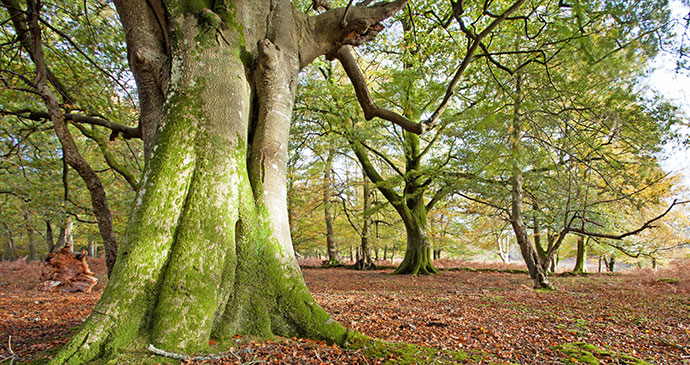 ancient_tree
